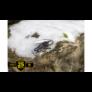 Kép 6/8 - LTG832741 Leatherman Signal, Cobalt